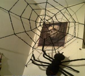 تار عنکبوت-تصویر اصلی