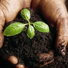 خاک برگ-تصویر اصلی