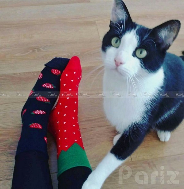 جوراب توت فرنگی-تصویر اصلی