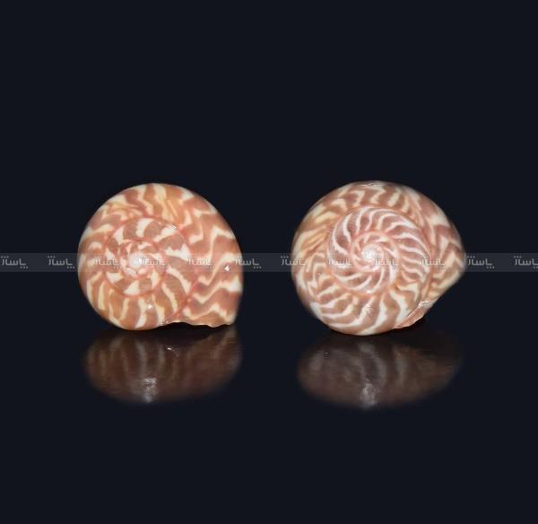 4 جفت میکروگوشواره صدفی ماسیا-تصویر اصلی