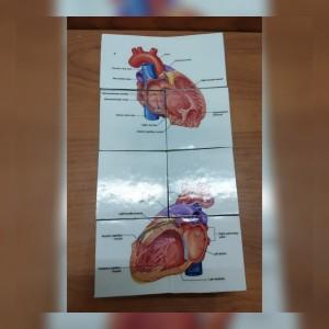 روبیک مکعب پزشک قلب-تصویر 2