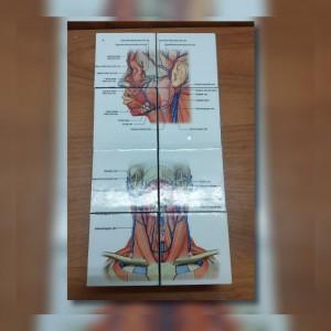 روبیک مکعب پزشک قلب-تصویر 3