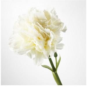 گل تک شاخه صنوبر ایکیا مدل SMYCKA