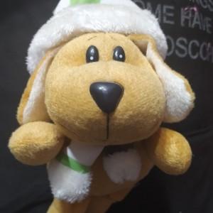 سگ پولیشی-تصویر 2