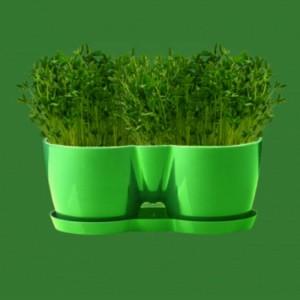 پک گلدان با بذر و کود
